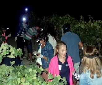 3ª Vendimia Solidaria Nocturna con Barbacoa Incluida